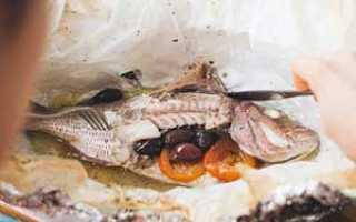 Таблица жирности лососевых рыб
