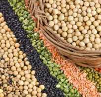 Растительный белок в каких продуктах содержится таблица