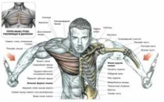 Упражнения для середины груди