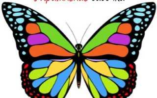 Тренажер бабочка какие мышцы