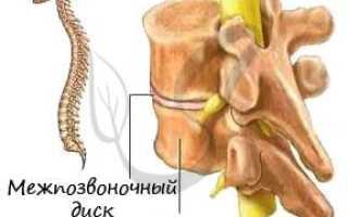 Таблица особенности строения скелета человека
