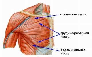 Верхняя часть груди упражнения
