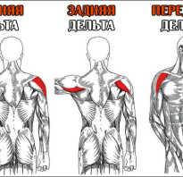 Упражнения на передние дельты с гантелями
