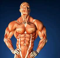 Нервно мышечная система человека