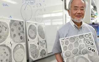 Японский ученый получил нобелевскую премию за голодание