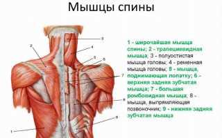 Упражнения для широчайших мышц спины с гантелями