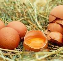 Вареные яйца во время диеты