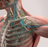 Лимфатическая система человека очищение