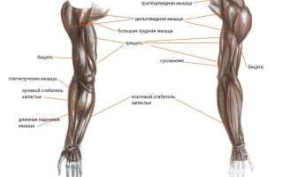Упражнения для рук и спины с гантелями